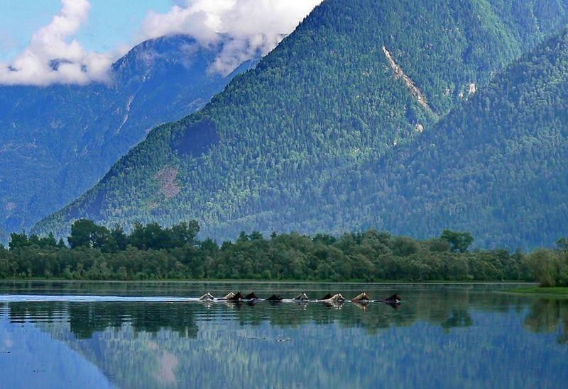По голубым озерам Алтая