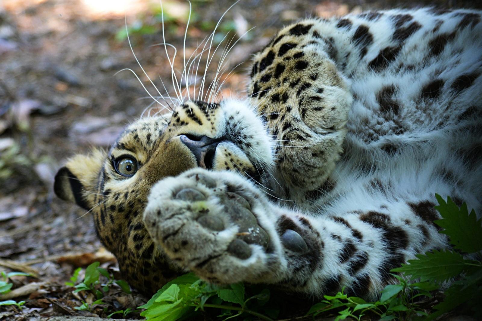 «Земля леопарда» + Японское море